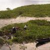 PT PLN Persero UPDK Sektor Minahasa Suport Program Pembersihan Danau Tondano